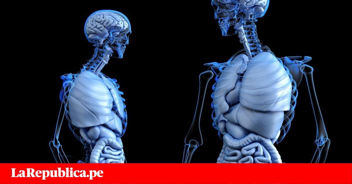 Descubren órgano en el cuerpo humano y sería el más grande hasta ...
