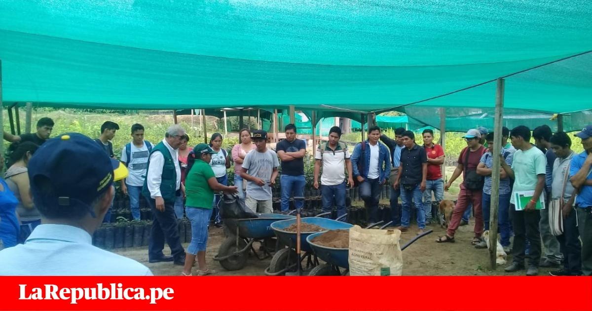 Productores de café se capacitan en el manejo del guano como abono