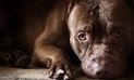 YouTube: hombre es acusado de intentar matar de hambre a un pitbull
