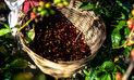 Exportación de café, entre enero y agosto, fue la más baja en 19 años