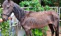 Fisicoculturistas de Miami enfrentan cargos por maltrato animal a dos caballos |FOTOS