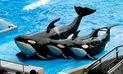 SeaWorld pone fin a espectáculos con orcas tras denuncia por maltrato animal |VIDEO