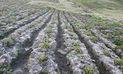 El Niño llega al Sur con lluvias, granizo, heladas y fuerte radiación solar