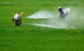 Plaguicidas adulterados ponen en riesgo salud y economía del agricultor