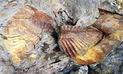 Vraem: capacitarán a autoridades sobre importancia del patrimonio paleontológico