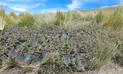 Arequipa: recuperan bosque de queñual en área protegida