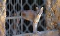Animales en peligro de extinción mueren en parque de Venezuela por falta de comida [FOTOS]