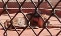 Venezuela: Animales desnutridos de zoológicos serán trasladados a Europa
