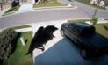 YouTube: Imágenes de pájaro flotando sin usar sus alas causa confusión en internet [VIDEO]