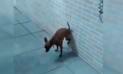 Facebook Viral: Creyó que su perro tenía la pata rota, se acercó y quedó asombrada [VIDEO]