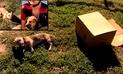Facebook: abandonan a un perro en una vía y la acción de ciclista conmueve a internautas [VIDEO]