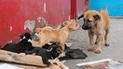 Facebook: crean campaña para construir casitas para animales con carteles de políticos [FOTOS]
