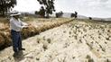 Arequipa: Por falta de pago de S/ 200 para transporte de raticidas hay 5 mil hectáreas de sembrío en riesgo