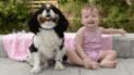 Bebé de un año estaba a punto de morir y su perro acude al rescate [VIDEO]