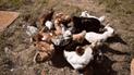 Facebook: Gallinas 'emboscan' a perro que trató de robarles su comida [VIDEO]