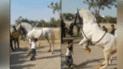 Facebook: caballo baila cumbia con un niño y sus pasos impresionan [VIDEO]