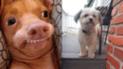 Facebook: perrita usa la dentadura postiza de su amo y su apariencia te hará reír [FOTOS]