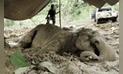 Asesinan a un centenar de elefantes para vender su marfil en China y Camboya