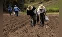 Ayacucho: candidatos regionales debatirán problemática del sector agrario