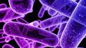 Potente antibiótico descubierto en la URSS sería la esperanza contra superbacterias