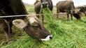 Minagri destina S/ 184 240 en favor de ganaderos tumbesinos