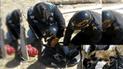 Huancayo: vecinos rescatan a zorro que iba a ser devorado por perros