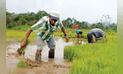 Anuncian que arroz peruano podrá exportarse nuevamente a Colombia