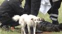 Facebook viral: perro no abandona a su dueño que se quedó dormido y causa ternura [VIDEO]