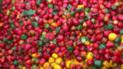 Holanda: agricultor desechó un millón de pimientos porque le parecían 'feos'