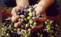 Minagri: Sector agropecuario creció 3,8% en julio de este año, ¿Qué productos toman la delantera? [INFOGRAFÍA]
