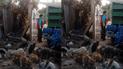 Los Olivos: acusan a serenos municipales por maltrato animal [VIDEO]