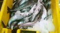 Tumbes: incautan 5 mil kilos de especie marina en veda reproductiva