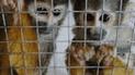 Facebook se opone a venta ilegal de animales silvestres