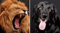 YouTube: perro ingresa a jaula de leones y ocurre lo más raro del mundo