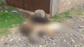 Envenenan a mascotas de juez de paz de la comunidad de Hercca en Cusco