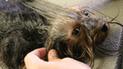 Twitter: Revelan lo que siente un perro cuando lo van a sacrificar