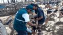 Lambayeque: Más de 5 mil animales fueron desparasitados