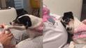 Facebook: perra tiene un emotivo comportamiento al ver a su dueña embarazada [VIDEO]