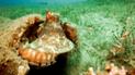 Facebook: enorme criatura marina intenta robar cámara de buzo para tomarse un selfie [VIDEO]