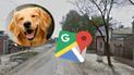 Google Maps: Captan el instante en que un perro pasa por un 'momento íntimo' y miles explotan de risa [FOTO]