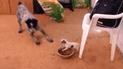 Facebook: perrito se enfrenta a gigantesco animal por proteger su comida [VIDEO]