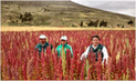 Huancavelica: mil pobladores de zonas rurales recibieron títulos de propiedad