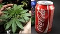 ¿Por qué Coca Cola estudia incursionar con una bebida de cannabis?