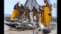 Exportaciones atuneras peruanas superarían los 250 millones de dólares este año