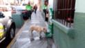 Policías de Tacna instalan bebederos y dispensadores de comida para perros callejeros