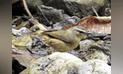 Tumbes: registran nueva especie de ave en Parque Nacional Cerros de Amotape