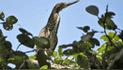 Tumbes: registran por primera vez especies de aves en nuevos ecosistemas