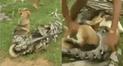 Facebook: niños salvan a un perro de una feroz serpiente y miles se asombran [VIDEO]