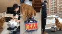 Facebook viral: perro quiere viajar con su dueño y hace lo más extraño para lograrlo [VIDEO]