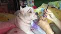 Facebook: Le aplica maquillaje a su mascota y el resultado impresiona a todos [VIDEO]